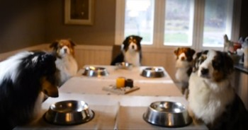 Family of Adorable Dogs Say Grace Before Eating - AMEN, Puppies