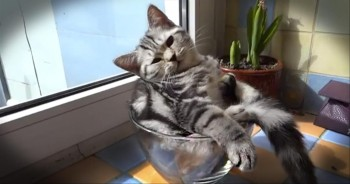 Who Ordered This Super Bowl of Sunbathing Kitten? LOL