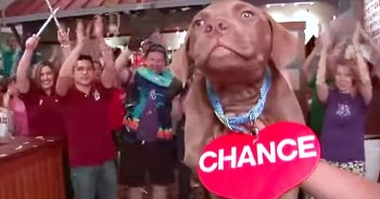 We Can't Get Enough of This Hilarious Animal Lip Dub!