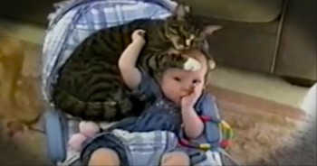 Kitty Loves Her Baby-Friend So Much. . .She Just Can't Get Close Enough!