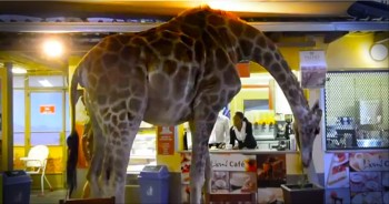 Guests at a Safari Park Never Expected This Wild Surprise. We're Jealous!