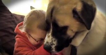 A Sick Boy Isolated Himself From the World, Until He Met This 3-Legged Dog.
