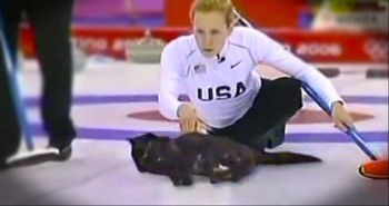 They've Found the Secret Ingredient to Improving an Olympic Sport. . .CATS!