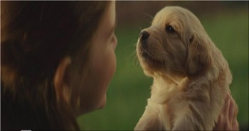 This is the Kind of Heartwarming Video that Every Dog Lover Must See