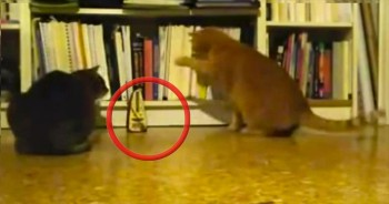 Cute Kitties are So Curious Over the Funniest Thing