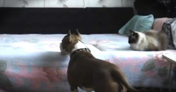 What this Funny Doggie Does When His Humans Are Away Will Make You Laugh