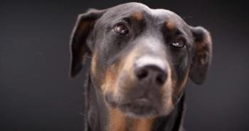 Dog SHOCKS Everyone With His Life-Saving Trick!