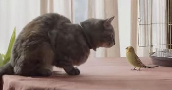 You'll NEVER Predict What Happens When Kitty Meets Bird