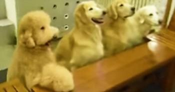 Precious Pups Pray Before Their Meal