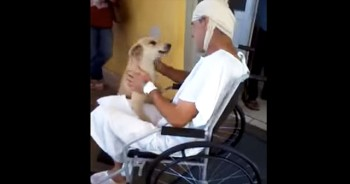 Owner and Dog Are Reunited at Hospital After 8 Long Days Apart