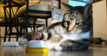 This Smart Kitty Has Her Human ALL Figured Out