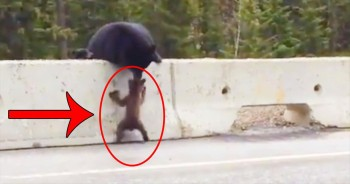 One Mama Bear Saves Cub From DEADLY Fate