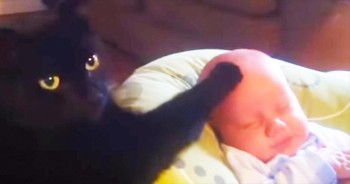 This Kitty Might Be The BEST Babysitter Ever. So Cute!