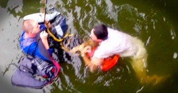 This Miracle Rescue Would've NEVER Happened Without This Group Of Selfless Strangers
