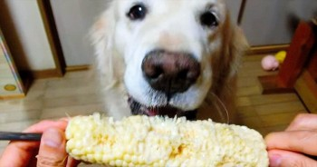 This Pup Sure Does Love Her Veggies – It's Almost Too Cute To Handle!