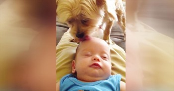 I've Heard Of Head Scratches Putting Babies To Sleep. But THIS Is Just Too Cute!