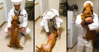 This Sailor Returned Home And Got The BEST Welcome – With Some Major Tail-Wagging