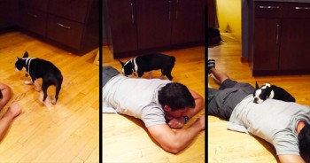 For 20 Minutes, He Was A Statue On The Floor - All To Comfort This Scared Pup