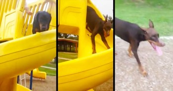 It Only Took 13 Seconds For This Pup To Completely SHOCK Me – I Never Saw That Coming!