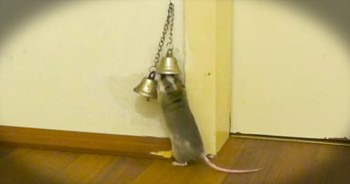 This Mouse Didn't Have A Doorbell, So He Did The Next CUTEST Thing