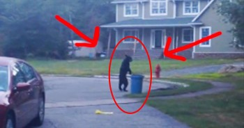 This Bear Thinks He's A Person – And It Has Me Completely Baffled!