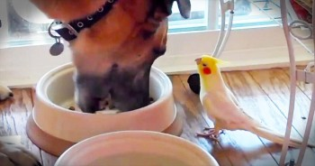 This Dog Gets The CUTEST Mealtime Serenade – How Sweet!