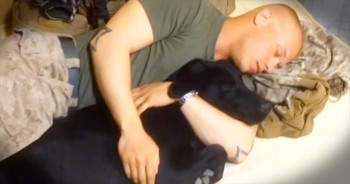 This Marine Is Finally Reunited With His 'Brother' – And It's A Tail-Wagging Story!