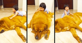 This Gentle Giant And His Little Human Are About To Completely ANNIHILATE Your Heart - AWW!