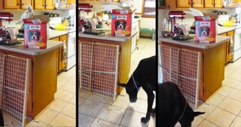 1 Generous Cockatoo Is Giving These Dogs EXACTLY What They Want – And It's Hilarious!