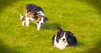 I Had No Idea What These Sneaky Pups Were Doing. At 1:36, I Couldn't Hold Back The Giggles!