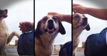 This Homeless Dog Wasn't Looking For Food. He Was Looking For Something Even MORE Heartbreaking