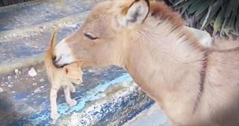 This Kitten Just Made A New Friend. And It's Seriously TOO Cute For Words!