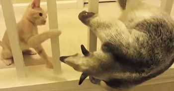 Move Over Kitty, There's A New Pet In Town And This Anteater Way Too Cute To Resist!