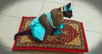 I Can't Stop Giggling Over This Feline's 'Flying' Carpet. Oh My The CUTENESS!