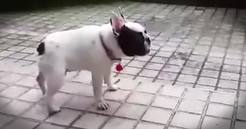When This Precious Pup Plays In The RAIN For The First Time, You Can't Help But Smile! AWW!