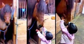 Adorable Baby Kisses Her Horse Goodbye – AWW!