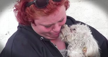 Homeless Poodle Brings Her Rescuer To Tears