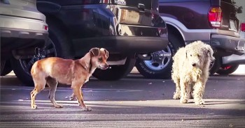 2 Homeless Dogs Are Separated Before Being Rescued By Kind Strangers