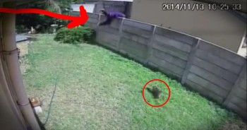 Burglar Gets Chased Off By A Yorkie Who Thinks He's An Attack Dog