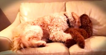 Sweet Dog Comforts Best Friend During A Nightmare