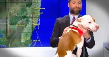 Hilarious Bulldog Interrupts Live News Cast
