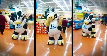 Dancing Cow Brings Tons Of Smiles To The Grocery Store