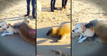 Friendly Seal Cuddles With Dog On The Beach