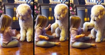 Adorable Little Girl Teaches Patient Pup New Tricks