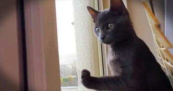 Precious Kitty Sees Snow For The First Time