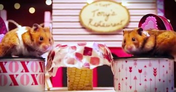 2 Tiny Hamsters Go On An Adorable Valentine's Date