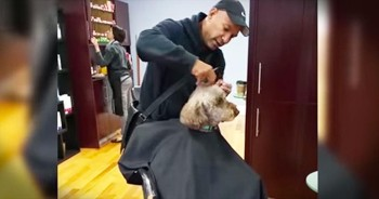 Spoiled Pup Treats Himself To New Haircut