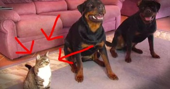 Copy Cat Performs Tricks Just Like Her Doggy Friends