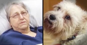Loyal Dog Walks 20 Blocks To Visit Owner In Hospital