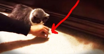 Sneaky Cat Grabs Treats From Beneath The Bed